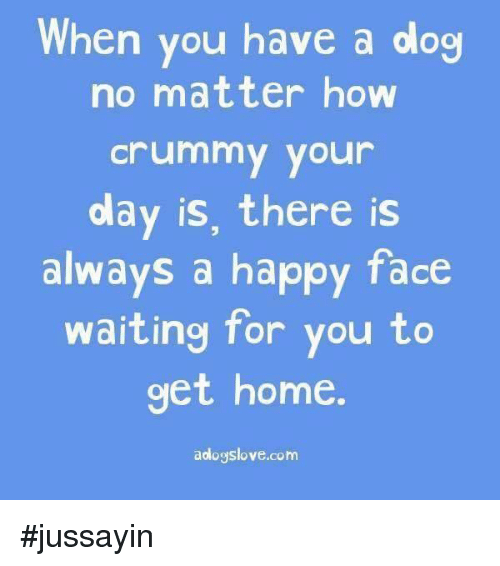 happy face: When you have a dog  no matter how  Crummy your  olay is, there is  always a happy face  waiting for you to  get home  aologslove.com #jussayin