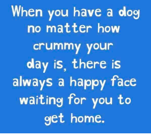 happy face: When you have a dog  no matter how  Crummy your  olay is, there is  always a happy face  waiting for you to  get home.