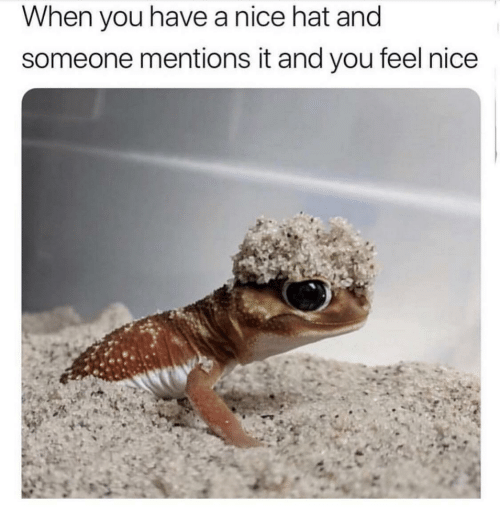 Feels Nice: When you have a nice hat and  someone mentions it and you feel nice