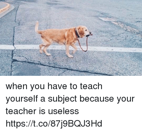 Teacher, Girl Memes, and You: when you have to teach yourself a subject because your teacher is useless https://t.co/87j9BQJ3Hd