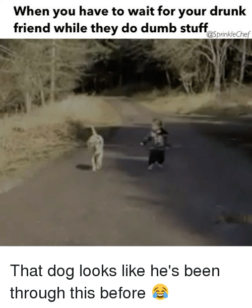 Sprinkle Chef: When you have to wait for your drunk  friend while they do dumb stuff  @Sprinkle Chef That dog looks like he's been through this before 😂