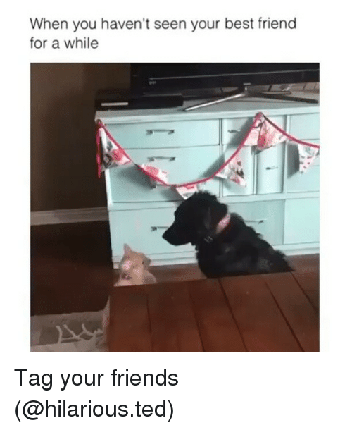 Quotes About Friends You Havent Seen In Awhile : When you haven t seen your best friend for a while tag friends meme on sizzle