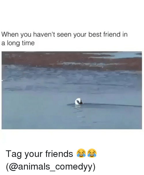 Animals, Best Friend, and Friends: When you haven't seen your best friend in  a long time Tag your friends 😂😂 (@animals_comedyy)