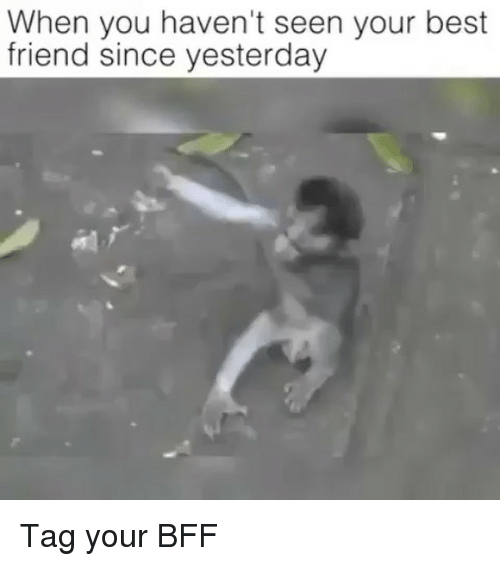 Best Friend, Memes, and Best: When you haven't seen your best  friend since yesterday Tag your BFF