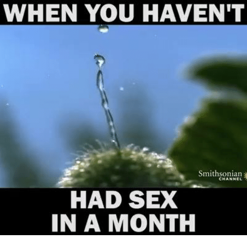 Sex, Smithsonian, and Dank Memes: WHEN YOU HAVEN'T  Smithsonian  HAD SEX  IN A MONTH
