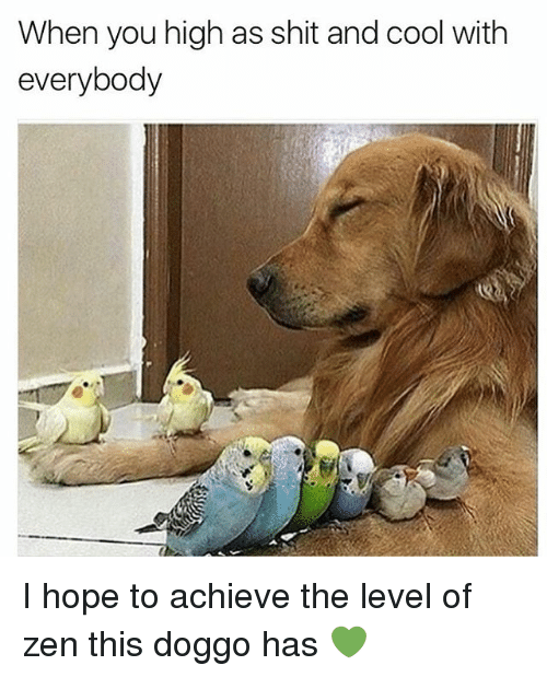 Shit, Weed, and Cool: When you high as shit and cool with  everybody  04 I hope to achieve the level of zen this doggo has 💚