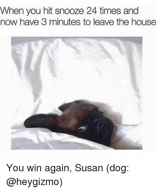 House, Girl Memes, and 24 Times: When you hit snooze 24 times and  now have 3 minutes to leave the house You win again, Susan (dog: @heygizmo)
