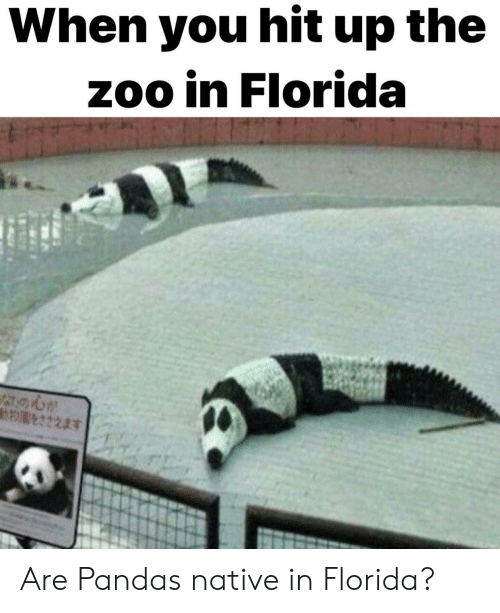 Native: When you hit up the  zoo in Florida Are Pandas native in Florida?
