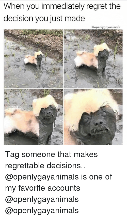 Regrettable: When you immediately regret the  decision you just made  @openlygayanimals Tag someone that makes regrettable decisions.. @openlygayanimals is one of my favorite accounts @openlygayanimals @openlygayanimals