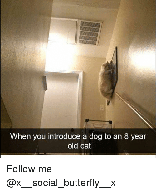 Memes, Butterfly, and Old: When you introduce a dog to an 8 year  old cat Follow me @x__social_butterfly__x