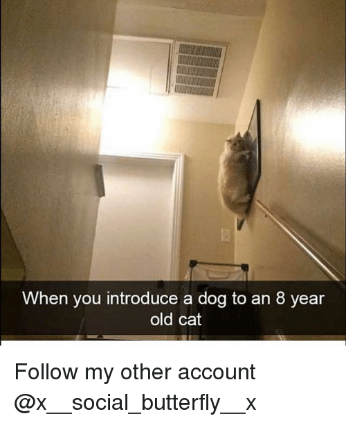 Memes, Butterfly, and Old: When you introduce a dog to an 8 year  old cat Follow my other account @x__social_butterfly__x