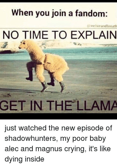 Picture Of A Llama Crying: Funny Llama Memes Of 2017 On SIZZLE