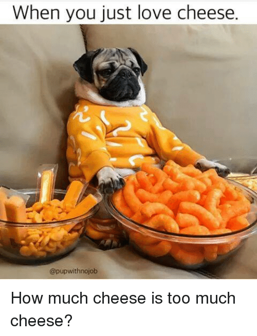 Love, Memes, and Too Much: When you just love cheese.  @pup with nojob How much cheese is too much cheese?