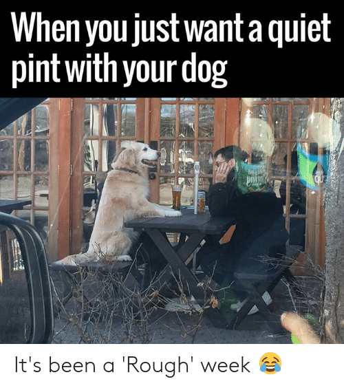 Rough Week: When you justwant a quiel  pint with your dog It's been a 'Rough' week 😂