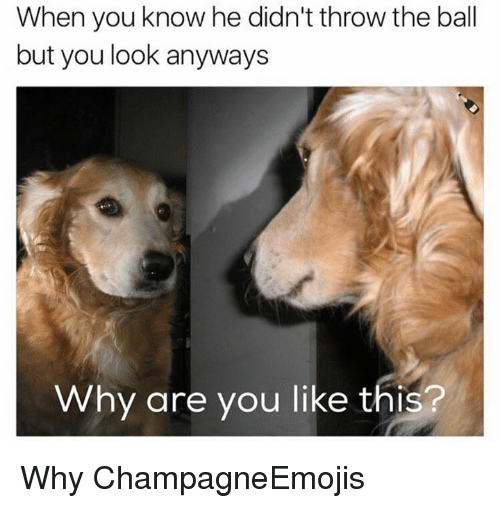 Memes, Why Are You Like This, and 🤖: When you know he didn't throw the ball  but you look anyways  Why are you like this? Why ChampagneEmojis