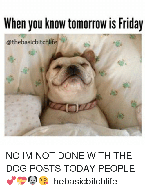 Tomorrow Is Friday: When you know tomorrow is Friday  @thebasicbitchlif NO IM NOT DONE WITH THE DOG POSTS TODAY PEOPLE 💕💝🐶😘 thebasicbitchlife