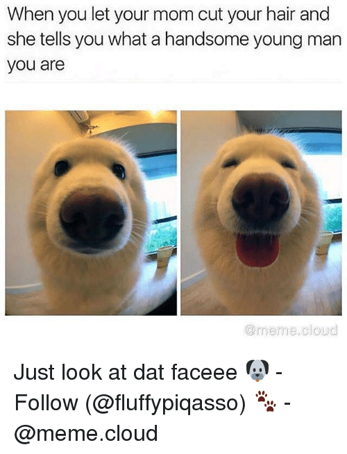 Meme, Memes, and Cloud: When you let your mom cut your hair and  she tells you what a handsome young marn  you are  @meme.cloud Just look at dat faceee 🐶 - Follow (@fluffypiqasso) 🐾 - @meme.cloud