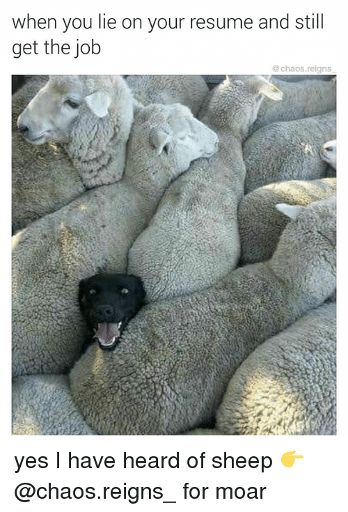 moar: when you lie on your resume and still  get the job  @ chaos.reigns yes I have heard of sheep 👉 @chaos.reigns_ for moar