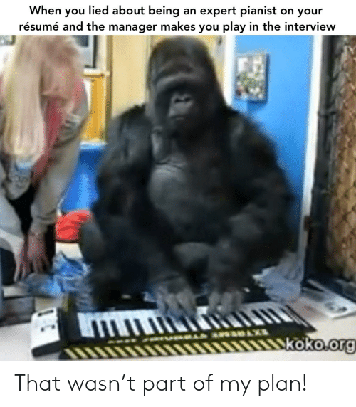 koko: When you lied about being an expert pianist on your  résumé and the manager makes you play in the interview  koko.org That wasn't part of my plan!