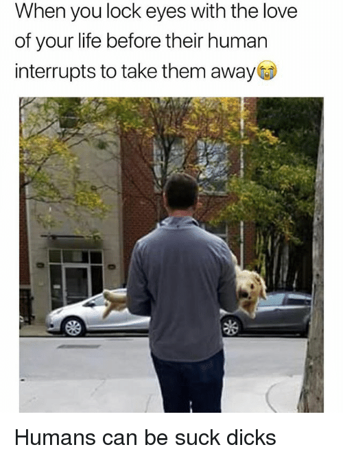 Dicks, Funny, and Life: When you lock eyes with the love  of your life before their human  interrupts to take them away Humans can be suck dicks