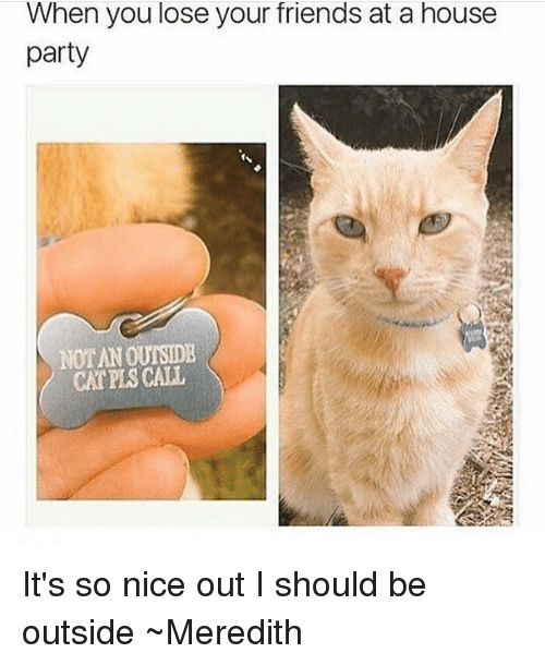 Friends, Memes, and Party: When you lose your friends at a house  party  NOTANOUTSIDE  CAT CALL It's so nice out I should be outside ~Meredith