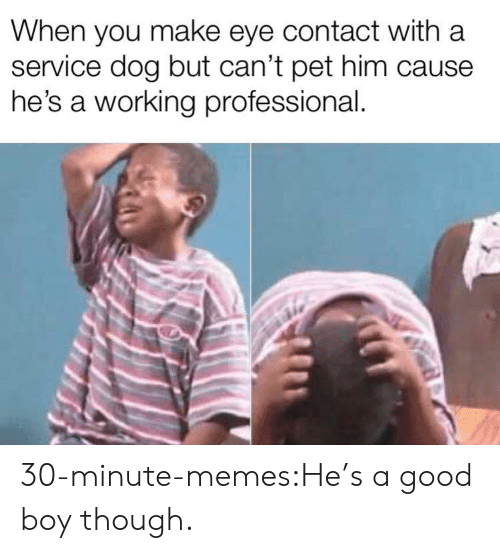 A Good Boy: When you make eye contact with a  service dog but can't pet him cause  he's a working professional. 30-minute-memes:He's a good boy though.