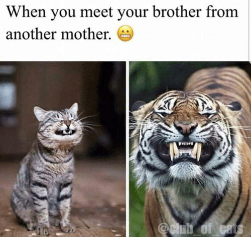 Brother From Another Mother: When you meet your brother from  another mother.