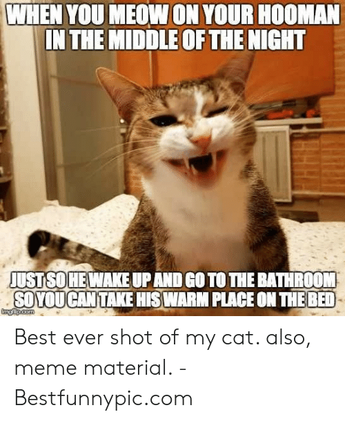 Bestfunnypic: WHEN YOU MEOW ON YOUR HOOMAN  IN THE MIDDLE OF THE NIGHT  JUST SO HE WAKE UPAND GO TO THE BATHROOM  SOYOUCAN TAKE HISWARM PLACE ON THE BED  imgfilp.com Best ever shot of my cat. also, meme material. - Bestfunnypic.com