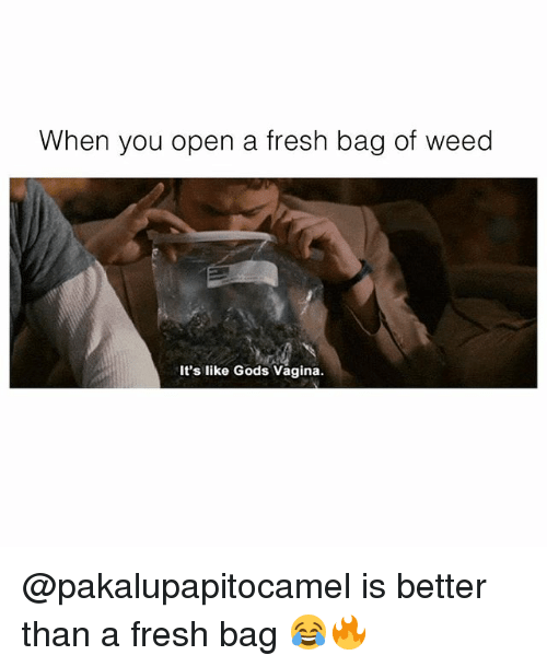 Fresh, Memes, and Weed: When you open a fresh bag of weed  It's like Gods Vagina. @pakalupapitocamel is better than a fresh bag 😂🔥