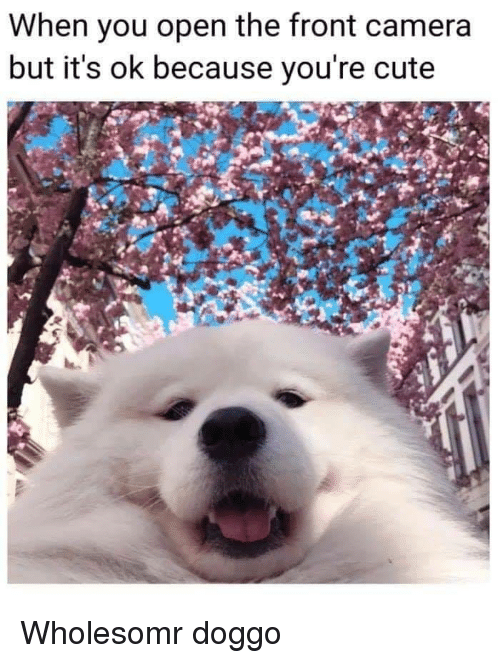 Cute, Camera, and Doggo: When you open the front camera  but it's ok because you're cute Wholesomr doggo