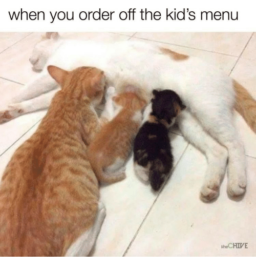 the chives: when you order off the kid's menu  the CHIVE