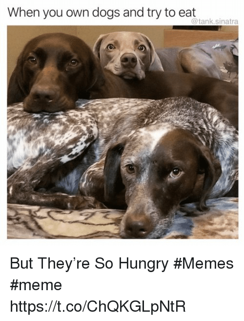 Hungry Memes: When you own dogs and try to eat  @tank.sinatra But They're So Hungry #Memes #meme https://t.co/ChQKGLpNtR