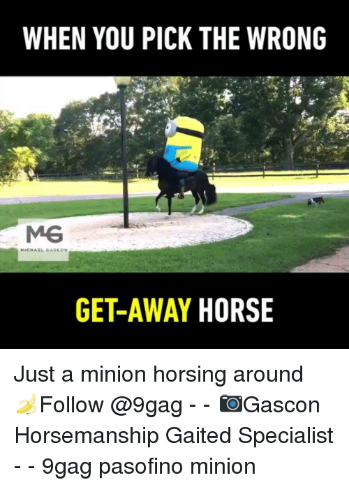9gag, Memes, and Horse: WHEN YOU PICK THE WRONG  GET-AWAY HORSE Just a minion horsing around 🍌Follow @9gag - - 📷Gascon Horsemanship Gaited Specialist - - 9gag pasofino minion