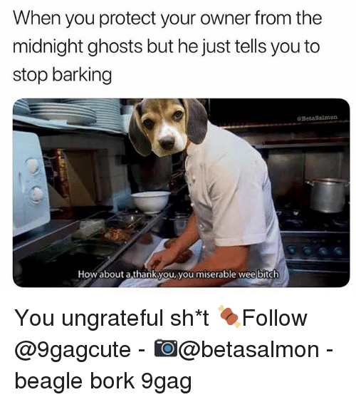 9gag, Memes, and 🤖: When you protect your owner from the  midnight ghosts but he just tells you to  stop barking  @BetaSalmon  How about a thankyou, you miserable weelbitch You ungrateful sh*t 🍖Follow @9gagcute - 📷@betasalmon - beagle bork 9gag