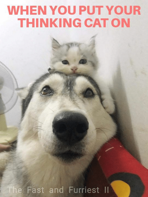 Thinking Cat: WHEN YOU PUT YOUR  THINKING CAT ON  e Fast and Furriest II