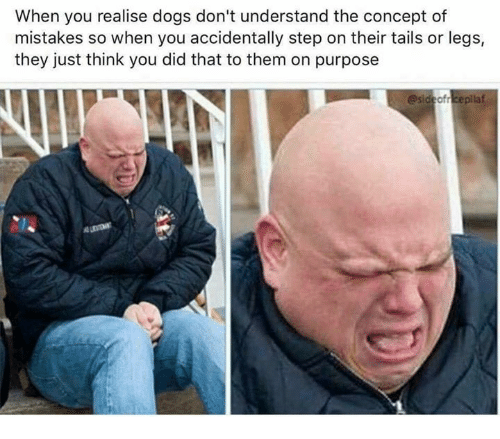 You Did That: When you realise dogs don't understand the concept of  mistakes so when you accidentally step on their tails or legs,  they just think you did that to them on purpose  esideofreepilaf