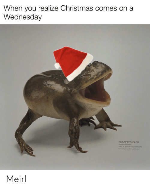 when you realize: When you realize Christmas comes on a  Wednesday  BUDGETT'S FROG  Lepidobatach ueva  2007 STATUS LEAST CONCERN  Na Aguir, Butin Mert Meirl