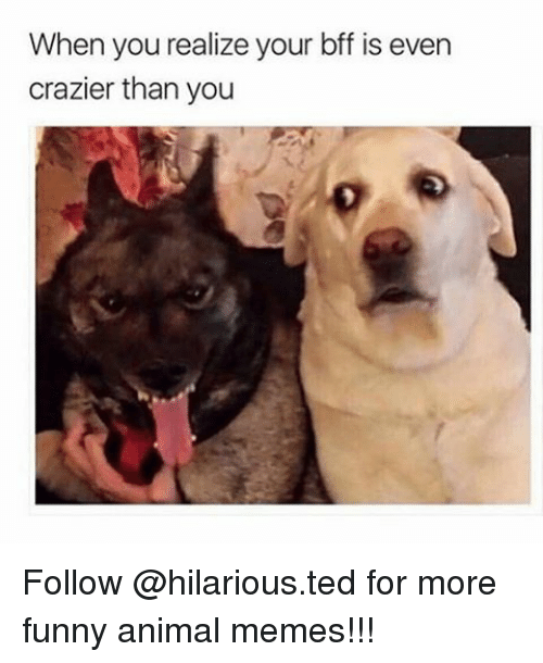 Animated Memes: When you realize your bff is even  crazier than you Follow @hilarious.ted for more funny animal memes!!!