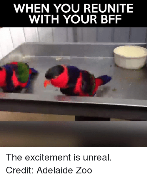 unreal: WHEN YOU REUNITE  WITH YOUR BFF The excitement is unreal.   Credit: Adelaide Zoo