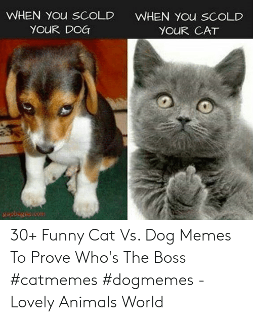 funny cat: WHEN You sCoLD  YOUR DOG  WHEN You SCOLD  YOUR CAT  gapbagap.com 30+ Funny Cat Vs. Dog Memes To Prove Who's The Boss #catmemes #dogmemes - Lovely Animals World