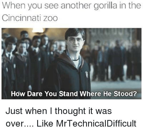 Dank, Thought, and 🤖: When you see another gorilla in the  Cincinnati Zoo  How Dare You Stand Where He Stood? Just when I thought it was over....  Like MrTechnicalDifficult