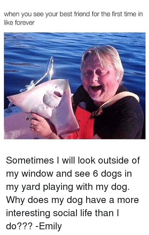 Memes, Windows, and 🤖: when you see your best friend for the first time in  like forever Sometimes I will look outside of my window and see 6 dogs in my yard playing with my dog. Why does my dog have a more interesting social life than I do??? -Emily
