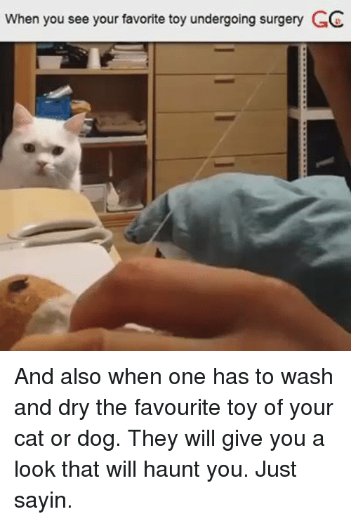 Memes, Haunting, and 🤖: When you see your favorite toy undergoing surgery GC And also when one has to wash and dry the favourite toy of your cat or dog. They will give you a look that will haunt you. Just sayin.