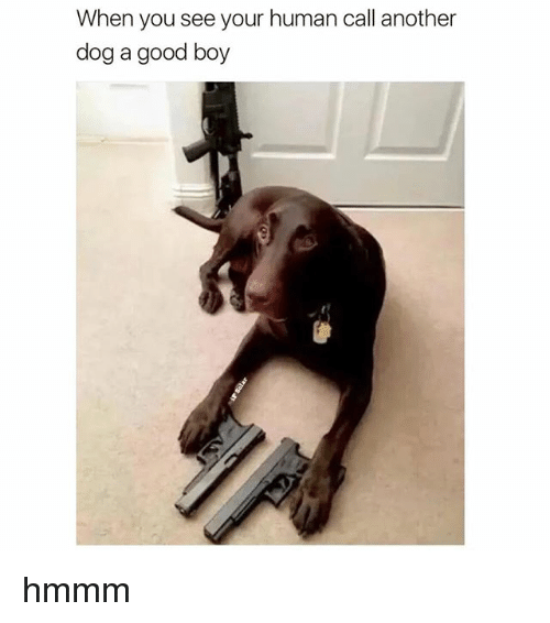 Dogs, Good, and Boy: When you see your human call another  dog a good boy hmmm
