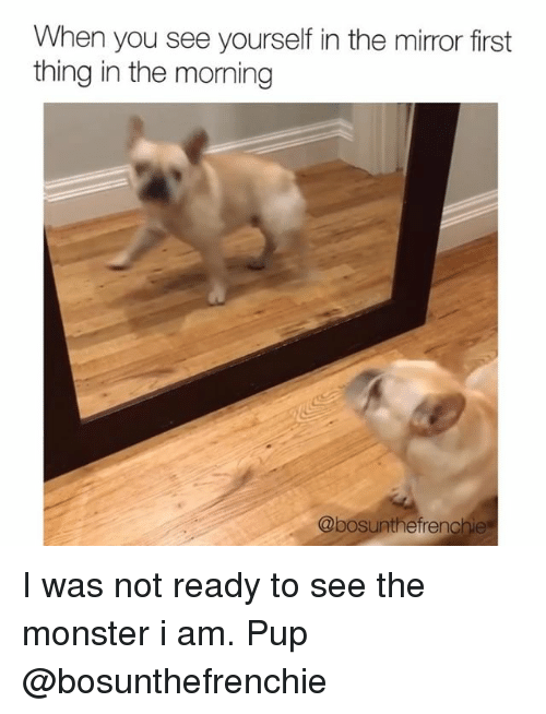 Memes, Monster, and Mirror: When you see yourself in the mirror first  thing in the morning  @bosunthefrenchie I was not ready to see the monster i am. Pup @bosunthefrenchie