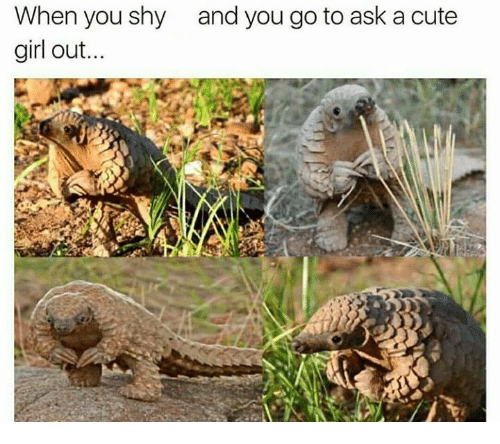 Shy Girl: When you shy  girl out...  and you go to ask a cute