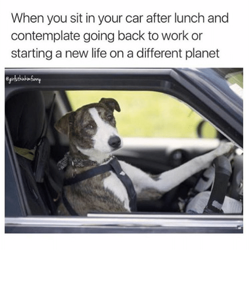 Trying To Get Your Dog To Sit With You