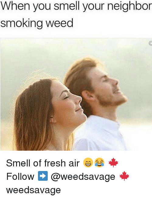 Memes, 🤖, and Weeds: When you smell your neighbor  smoking weed Smell of fresh air 😁😂 🍁Follow ➡ @weedsavage 🍁 weedsavage