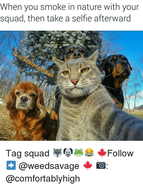 Memes, 🤖, and Afterwards: When you smoke in nature with your  squad, then take a selfle afterward Tag squad 🐺🐶🐸😂 🍁Follow ➡ @weedsavage 🍁 📷: @comfortablyhigh