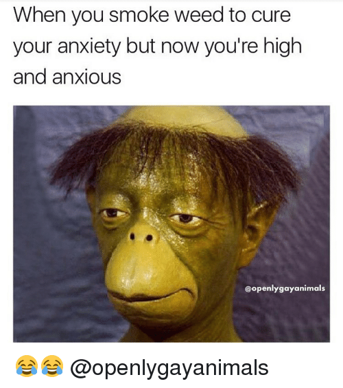 Smoke Weed: When you smoke weed to cure  your anxiety but now you're high  and anxious  @openly gayanimals 😂😂 @openlygayanimals